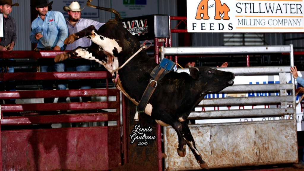 Karley Page's bull #5B- winning the Youth Futurity. Photo by Gautreau