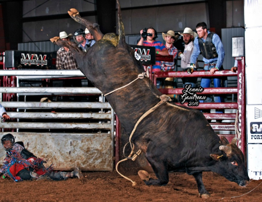 D&H Cattle/OK Corralis/Gordon bull #255 Organized Crime winning the Classic with a 91.75 point score. Photo by Gautreau